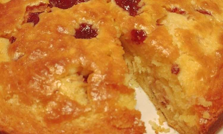 Torta maculata